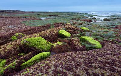 Wetlands Photograph - Ocean Floor Revealed by Joseph Smith