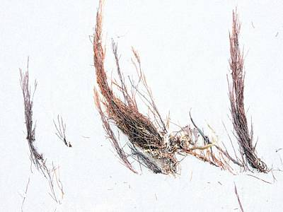 Photograph - Ocean Grasses by Marcia Lee Jones