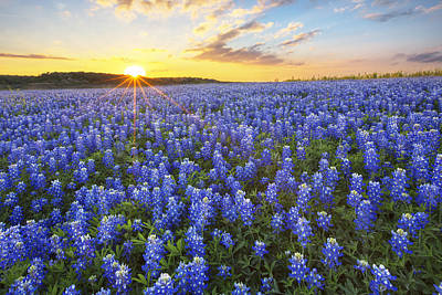 Wildflowers In Texas Photograph - Ocean Of Bluebonnets At Sunset 1 by Rob Greebon