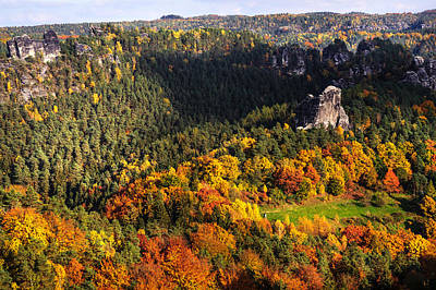 Photograph - Ocean Of Fall Trees. Saxon Switzerland by Jenny Rainbow