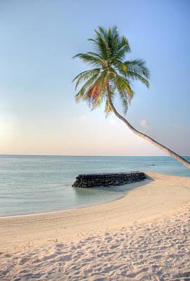 Ocean Palm Art Print