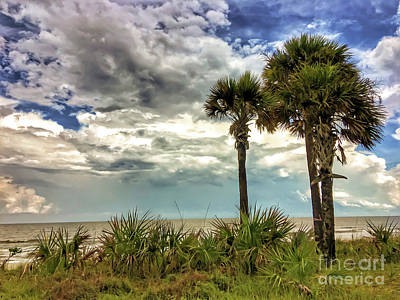 Photograph - Ocean Palms by Kerri Farley