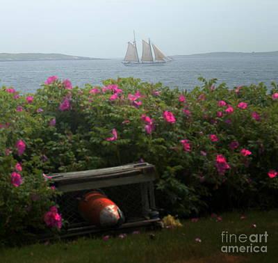 Ocean Point Maine Art Print by Julie Hodgkins