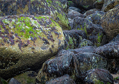 Photograph - Ocean Rocks by Rick Mosher
