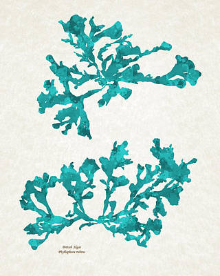 Mixed Media - Ocean Seaweed Plant Art Phyllophora Rubens by Christina Rollo