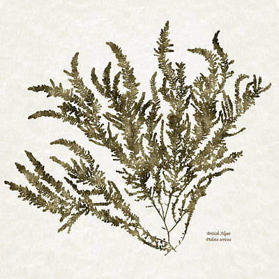 Mixed Media - Ocean Seaweed Plant Art Ptilota Sericea Square by Christina Rollo
