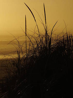 From The Kitchen - Morning Fog Outer Banks Ocean Sunrise  by Cindy Treger