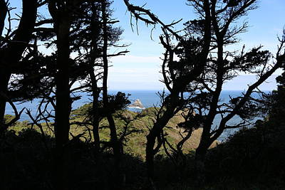 Photograph - Ocean Through The Trees  by Christy Pooschke