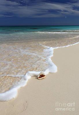 Photograph - Ocean Treasure I by Mary Haber