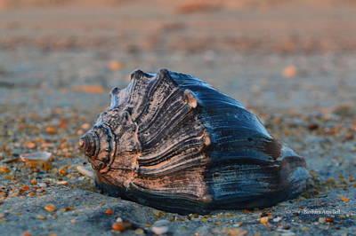 Ocean Treasures Art Print