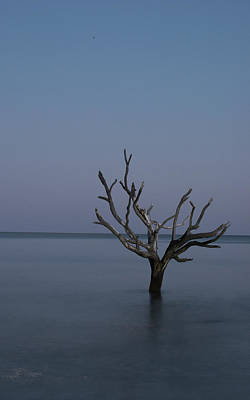 Photograph - Ocean Tree by Joe Shrader