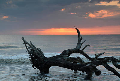 Ocean Treescape At Sunrise Art Print by Bruce Gourley