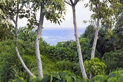 Photograph - Ocean View Through Jungle by Frank Wilson