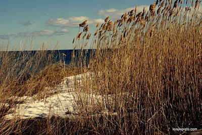 Art Print featuring the photograph Ocean View Through The Grasses by Lois Lepisto