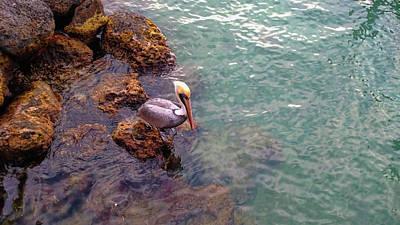 Photograph - Ocean Watcher by JAMART Photography