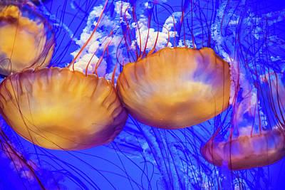 Ocean Wonders Art Print by David A Litman