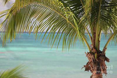 Photograph - Oceanfront Palm Trees by Wilko Van de Kamp