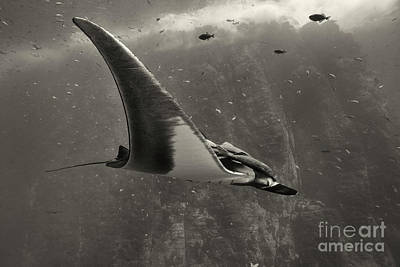 Photograph - Oceanic Flight by Aaron Whittemore