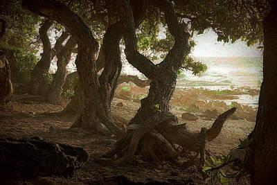 Photograph - Oceanside Trees by Lori Seaman