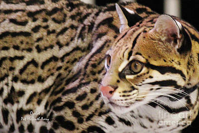 Photograph - Ocelot by Pat McGrath Avery