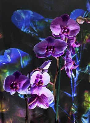 Digital Art - Orchidream by Richard Thomas