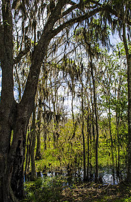 Photograph - Ocklawaha Spanish Moss In The Swamp by Deborah Smolinske