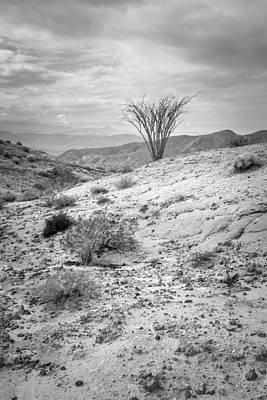 Photograph - Ocotillo by Alexander Kunz