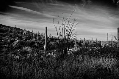 Photograph - Ocotillo And Saguaros by Sandra Selle Rodriguez