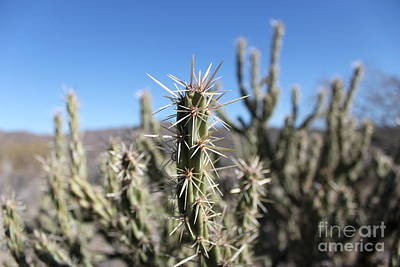 Art Print featuring the photograph Ocotillo by Antonio Romero