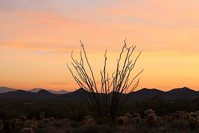 Photograph - Ocotillo At Sunset  by Christy Pooschke