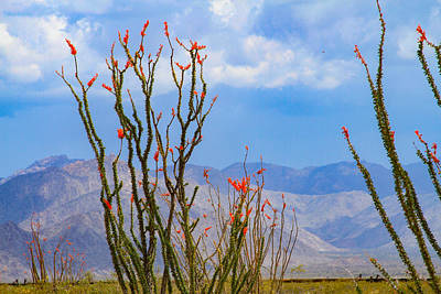 Photograph - Ocotillo Cactus With Mountains And Sky by Bonnie Follett