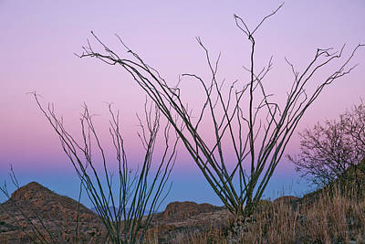 Photograph - Ocotillo Earth Shadow by Tom Daniel