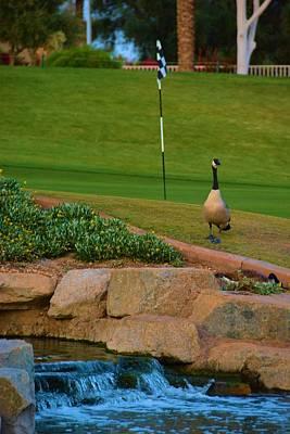 Bogie Digital Art - Ocotillo Golf Club And Candian Goose by Richard Jenkins