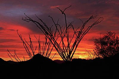 Photograph - Ocotillo Sunset by Tom Daniel