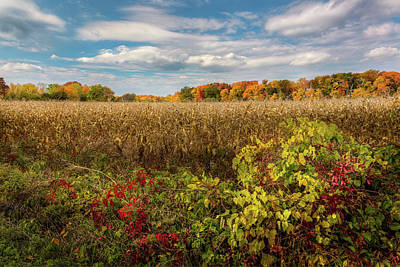 Cornfield Photograph - October by Bill Wakeley
