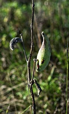 Photograph - October Bugs by Miguel Winterpacht