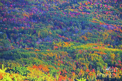 Photograph - October Colors by Patti Whitten