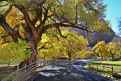 Photograph - October Cottonwoods by Dana Sohr