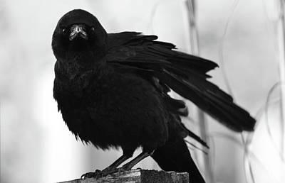 Photograph - October Crow by Rae Ann  M Garrett