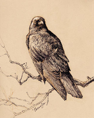 Crow Drawing - October Crow by Tracie Thompson
