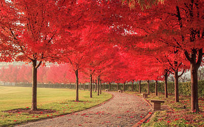 Photograph - October Dream by Scott Rackers