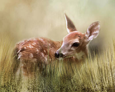 Photograph - October Fawn by TnBackroadsPhotos