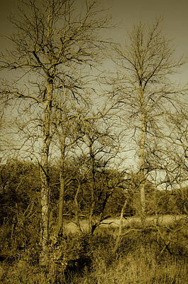 Photograph - October Forest by Miguel Winterpacht