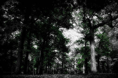 Lush Mixed Media Photograph - October In The Forest Sc by Thomas Woolworth