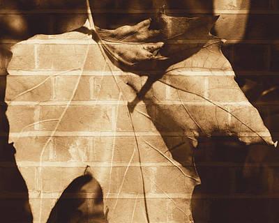 Photograph - October Leaf A Fine Art by Jacek Wojnarowski
