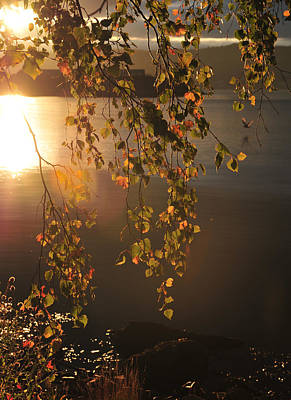 Photograph - October Light by Randi Grace Nilsberg
