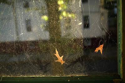 Photograph - October Light by Yuri Lev