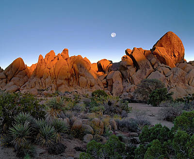 Photograph - October Moon - Joshua Tree N. P. by Paul Breitkreuz