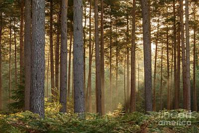 Bracken Fern Photograph - October Morning New Forest by Richard Thomas