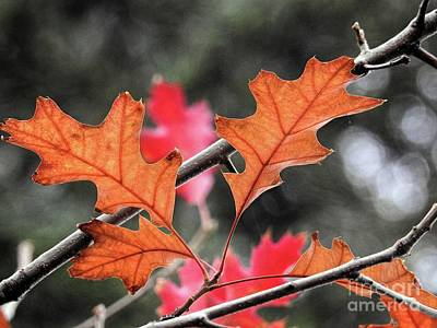 Photograph - October by Peggy Hughes